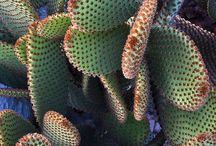 Domestic Gardens / #plants #cactus #decoration #pots