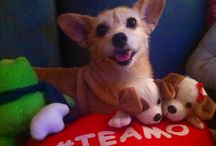 My little lady dog / I love this little one! She is our treasure. Sunny and Jim