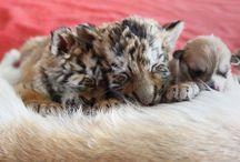 Животный мир / необычные фото и ситуации с животными