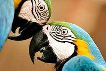 Birds / love bird :D follow our boards <3