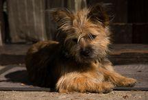 Adopted dog - Csipke