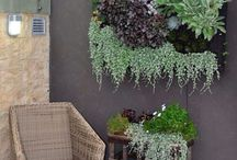 Rośliny zielone ściany