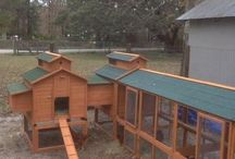 Chicken coops / by Jane Poppell