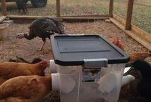 Animals feeder