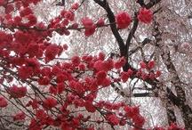 Cherry red...