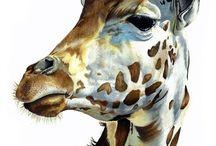Ref: Giraffes