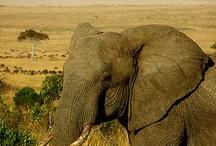 Afrikas dyr