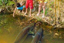 peixes do nosso brasil