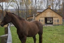 The Beauty of a Horse / B&D Builders' loves horses and would be honored to build an equestrian facility for you! Learn more at www.custombarnbuilding.com.