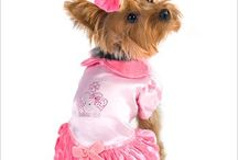 Pawsome Costumes for Dogs / Pet Parent? then check out these costumes for dogs, with halloween already here, no need to scramble for costume ideas; we have them all!