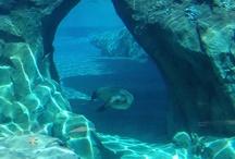 Underwater Reference