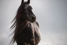 Photography ~ Horses