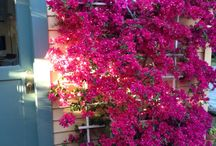 balkon bahçeleri