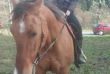 I and horse