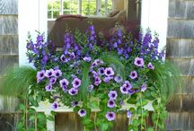 Window Boxes & Containers