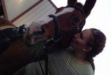 Horse / Horse