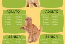 Cuidado de gatos