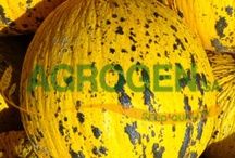 Greek Traditional Seeds / We are glad to announce that we can offer you traditional greek vegetable seeds
