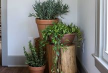 Plant displays/ideas