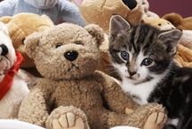 Stuffed animal birthday