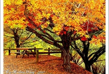 Australian Autumn Gardens