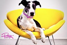 Pets on Furniture / by Modernica / Case Study Furniture