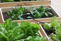 野菜育てる