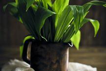 Bärlauch I Wild garlic I Ramson