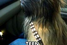Chewbacca so cute
