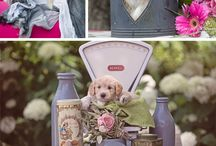 Labradoodle pups / To cute to hide in a computer. What is more cute than a puppy? Yes lots of them!!! Hope you enjoy them just as much as I did to create these pictures.#dogs #puppies