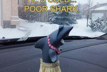 Hula Shark / Who knew a shark could hula?