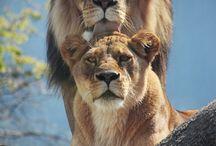 animais incríveis