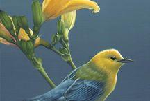 Păsări -salvari