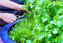 Green Thumb Gardening  / Gardening tips, tricks and ideas to cultivate your green thumb