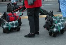 All things Scottie / by Colleen O'Rourke