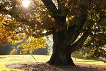 Self-Guided Tours - Great Trees