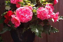 Bloemen uit mijn tuin / Bloemen uit mijn tuin