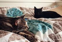 Cat and cat and cat:)