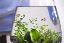 Small fish tanks
