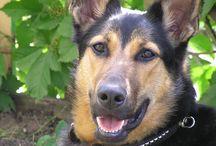 Psy - dogs / Piękne zdjęcia psów