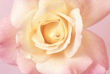 Foto's Ron van Dongen / Beautiful flowers