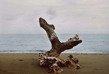 ] Landscapes [