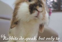 Bunny Inspiration / Quotes and thoughts that Inspire all us bunny people