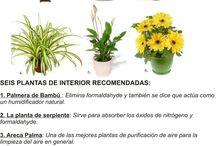 Gardening / Urban gardening ideas