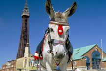 Summer Holidays in Lancashire / Inspiration for holidays in Lancashire