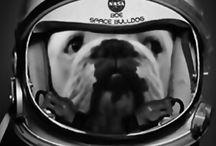 Boe / Bulldog