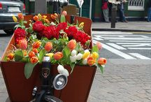 Flowers in Amsterdam