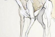anatomy_canine