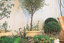 Vasos grandes com plantas