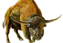Bisons..Uros..Prehistorics...